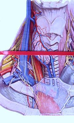 Varicosity di vene trattamento fisso dalle risposte laser
